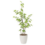【送料無料】バウヒニア1.3 (人工観葉植物) 高さ130cm 光触媒機能付 (821A220)