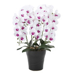 【送料無料】フレッシュ胡蝶蘭W/L 5本立 (造花) 高さ74cm 光触媒 (876A200)