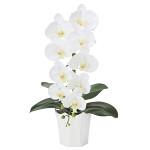フレッシュ胡蝶蘭W (造花) 高さ50cm 光触媒 (878A70)