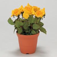 造花鉢 バラ 黄色 (935-10)