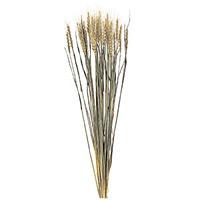小麦 D050080 40本入 (40070***)