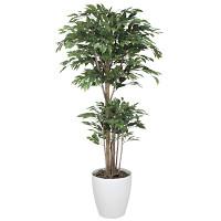 【2019年新商品】【送料無料】トロピカルベンジャミン 1.8 (造花) 高さ180cm 光触媒 (162F570)