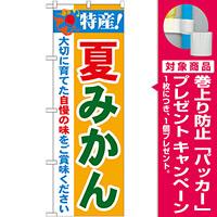 のぼり旗 特産!夏みかん (21479) [プレゼント付]