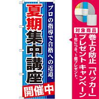 のぼり旗 夏期集中講座 開催中 (GNB-1593) [プレゼント付]