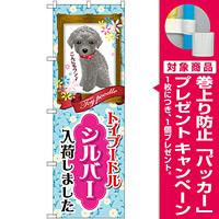 のぼり旗 トイプードル シルバー 入荷 (GNB-2461) [プレゼント付]
