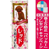 のぼり旗 トイプードル レッド 入荷 (GNB-2466) [プレゼント付]