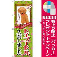 のぼり旗 トイプードル入荷 (GNB-2467) [プレゼント付]