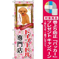 のぼり旗 トイプードル専門店 (GNB-2468) [プレゼント付]
