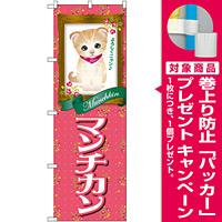 のぼり旗 マンチカン (GNB-2489) [プレゼント付]