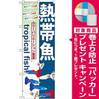 のぼり旗 熱帯魚 (GNB-568) [プレゼント付]