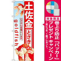 のぼり旗 土佐金 (GNB-586) [プレゼント付]