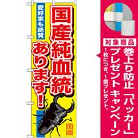 のぼり旗 国産純血統あります! (GNB-605) [プレゼント付]