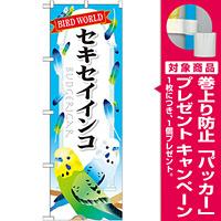 のぼり旗 セキセイインコ (GNB-613) [プレゼント付]