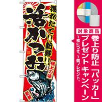のぼり旗 活かつお (SNB-1480) [プレゼント付]