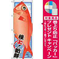 のぼり旗 金目鯛 (イラスト) (SNB-1555) [プレゼント付]