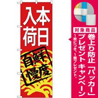 (新)のぼり旗 本日入荷(赤地) (SNB-4298) [プレゼント付]