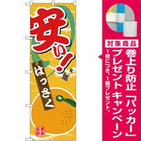 のぼり旗 安い はっさく (SNB-4382) [プレゼント付]
