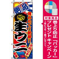 のぼり旗 (2677) 生ウニ [プレゼント付]