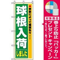 のぼり旗 (3251) 球根入荷 [プレゼント付]