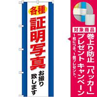 のぼり旗 (GNB-244) 各種証明写真 [プレゼント付]