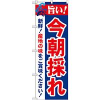 のぼり旗 旨い!今朝採れ (21689)
