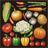 ベジタブル(1) 看板・ボード用イラストシール 野菜たくさん(W285×H285mm)