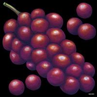 デコシール 赤葡萄 サイズ:ビッグ W600×H600 (61874)