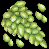 デコシール 白葡萄 サイズ:ビッグ W600×H600 (61875)