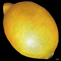 デコシール レモン サイズ:ビッグ W600×H600 (61892)