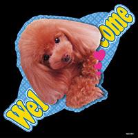 デコシール 犬 プードル レッド (写真) サイズ:ビッグ W600×H600 (61941)