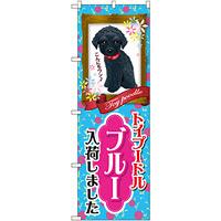 のぼり旗 トイプードル ブルー 入荷 (GNB-2463)