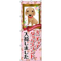 のぼり旗 ミニチュアダックスフンド入荷 (GNB-2491)