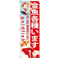のぼり旗 金魚各種います (GNB-581)