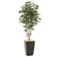 【2019年新商品】【送料無料】アーバンベンジャミン1.8 (造花) 高さ180cm 光触媒 (946A600)