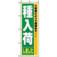 のぼり旗 (3250) 種入荷