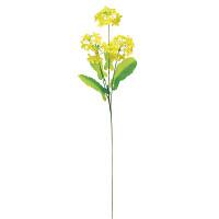 菜の花x4輪