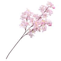 中桜ブランチ3本立