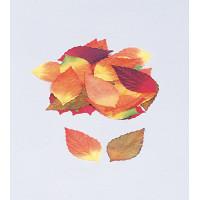 マリックス白樺落葉(50枚セット)