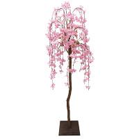 シダレ桜立木