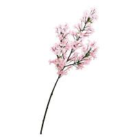 小桜ブランチ