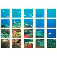 マルチシート 海の仲間たち (917-09)