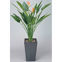 アートストレチア 花付 (人工観葉植物) 高さ160cm 光触媒 (115B800)