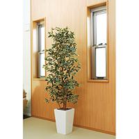 【送料無料】ガジュマルタワーG/W (人工観葉植物) 高さ180cm 光触媒 (122B550)