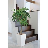 【送料無料】ロイヤルパキラ (人工観葉植物) 高さ135cm 光触媒 (129A380)