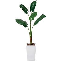 【送料無料】くわず芋 (人工観葉植物) 高さ140cm 光触媒 (133A350)