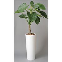 アートくわず芋 (人工観葉植物) 高さ180cm 光触媒 (134A750)