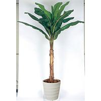 【送料無料】バナナ (人工観葉植物) 高さ200cm 光触媒 (135B500)