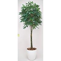 パキラ (人工観葉植物) 高さ200cm 光触媒 (140B580)