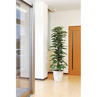 【送料無料】ジャイアントポトス (人工観葉植物) 高さ180cm 光触媒 (145A350)