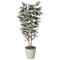 【送料無料】トネリコ (人工観葉植物) 高さ180cm 光触媒 (146A400)